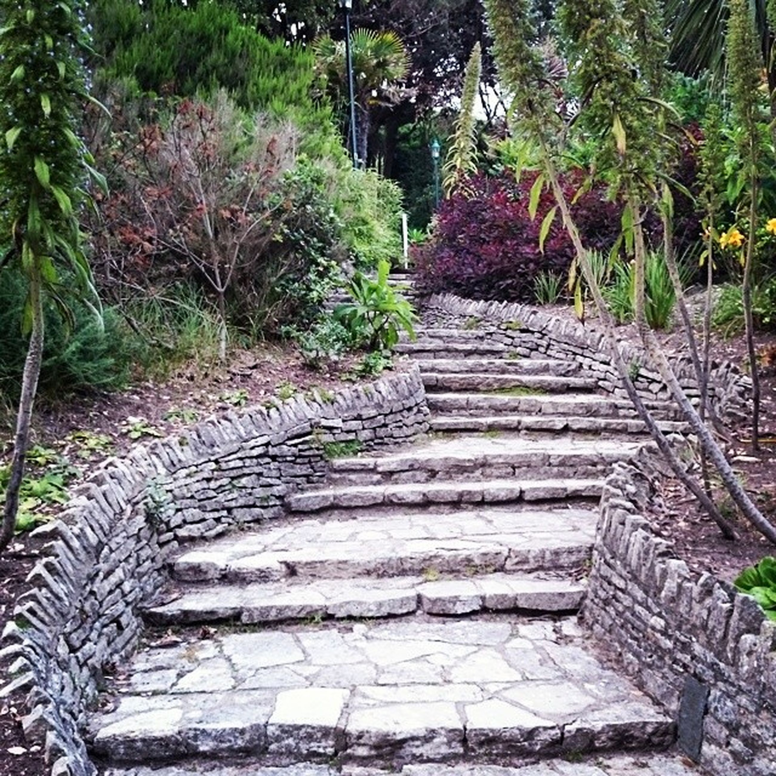 steps, staircase, steps and staircases, built structure, tree, the way forward, plant, architecture, stone wall, growth, stairs, old, railing, wall - building feature, building exterior, outdoors, no people, day, wood - material, sunlight