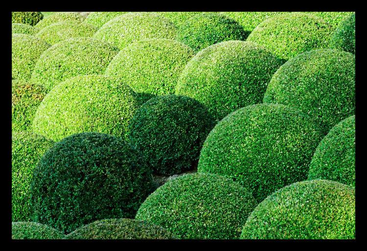 Alignement de buis dans le château d'Amboise Buis, Green Green Green Color Jardin Jardins Jardins, Topiaire, Touraine, Vert,