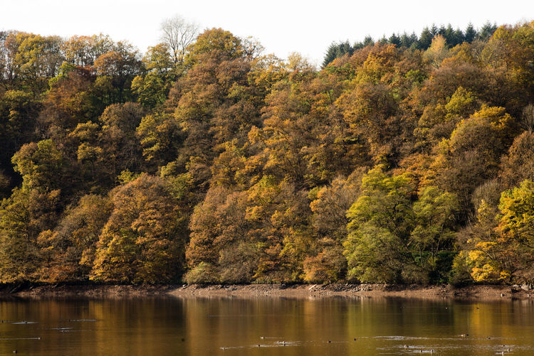 Scenic view of lake by trees in forest during autumn