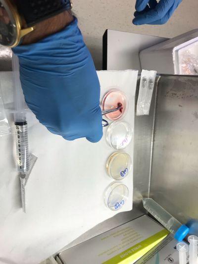 Building an artificial beating heart Organ Technology Tech Scientific Experiment Hand Holding Working