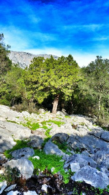 One Tree but not Single Magnificentsardegna