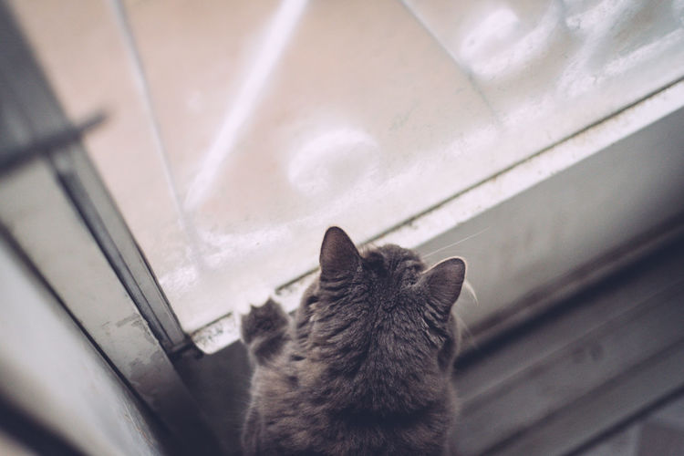 High angle close-up of cat on window sill