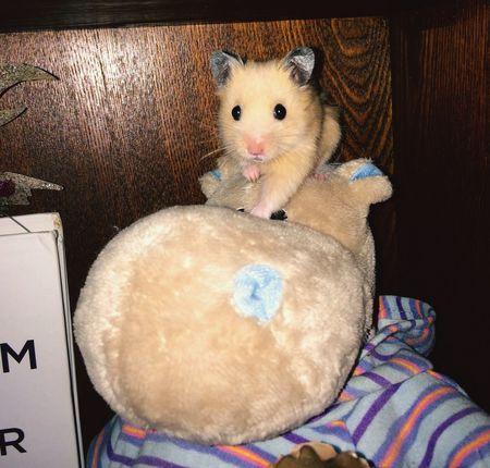 Hi! Home Saint Petersburg Enjoying Life Hamster Love Hamster Hamster ♡ My Hamster Hamst