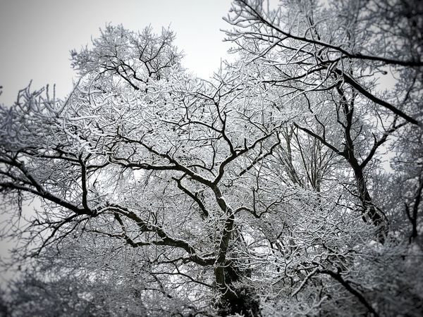 Monochrome Abstract Bare Tree Beauty In Nature Black And White Blackandwhite Branch Cold Cold Temperature Day Forest Low Angle View Nature Outdoors Snow Tranquility Tree Winter