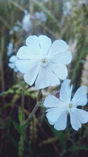 EyeEm Best Shots - Nature Taking Photos Natur Pur Flowers