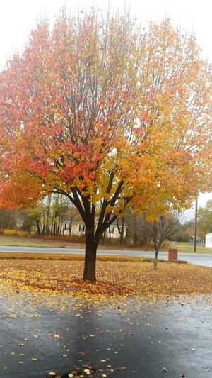 September Fall Colors Fall Leaves Fall_collection Autumn Colors Autumn Autumn Leaves Orange&yellow Fallen Leaves Fallcolors