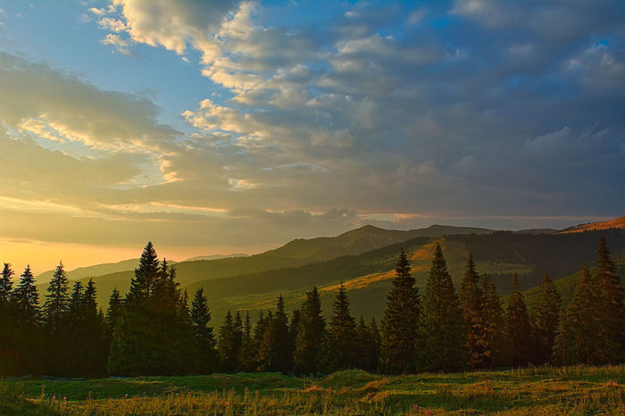 Pasul Prislop Beauty In Nature Cloud Cloud - Sky Cloudy Field Growth Horizon Over Land Idyllic Landscape Mountain Mountain Range Nature Non-urban Scene Plant Scenics Sky Sunset Tranquil Scene Tranquility Tree