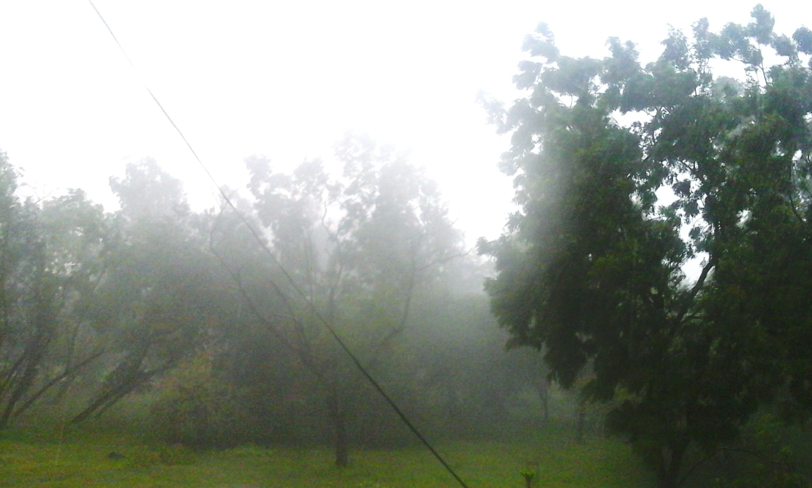 tree, tranquility, fog, tranquil scene, growth, beauty in nature, nature, foggy, forest, scenics, branch, non-urban scene, green color, day, sky, outdoors, no people, low angle view, sunlight