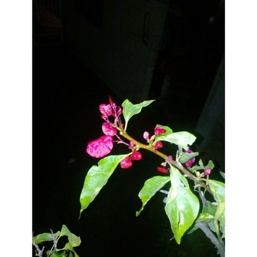 Leaf Plant No People Close-up Nature Flower Black Background Growth Day Outdoors Beauty In Nature Freshness Flower Head