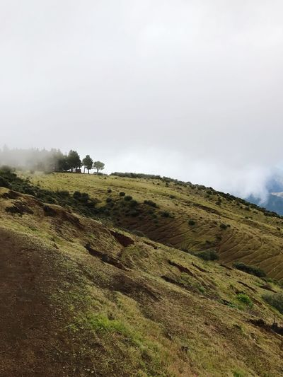 Gran Canaria Tejeda Fog Foggy Clouds And Sky Cloud Nature Landscape Tranquility Beauty In Nature Tranquil Scene Sky Scenics Grass No People Field Day Outdoors Slope Hill