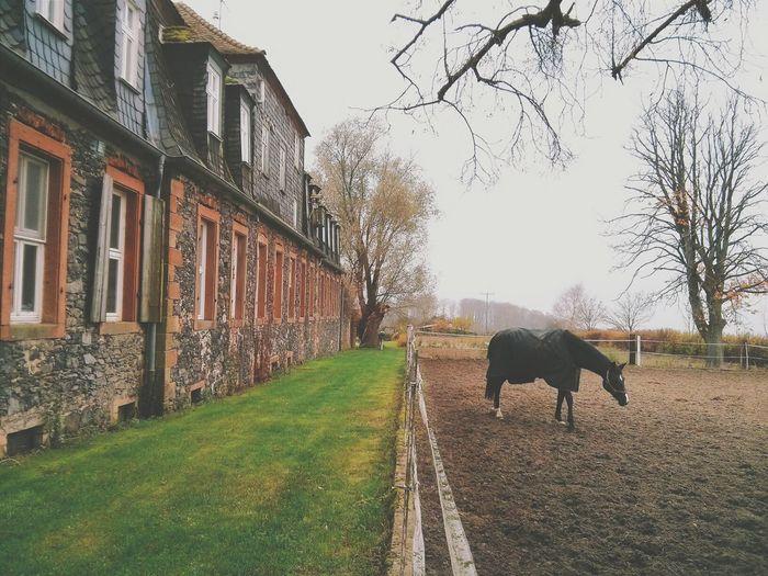 Ponyhof