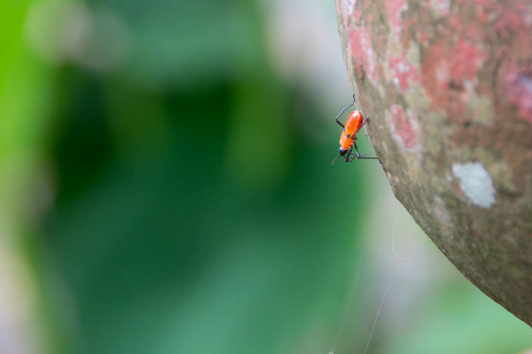 Bug EyeEm Nature Lover Animal Wildlife Close-up Focus On Foreground Insect Nature Outdoors Small