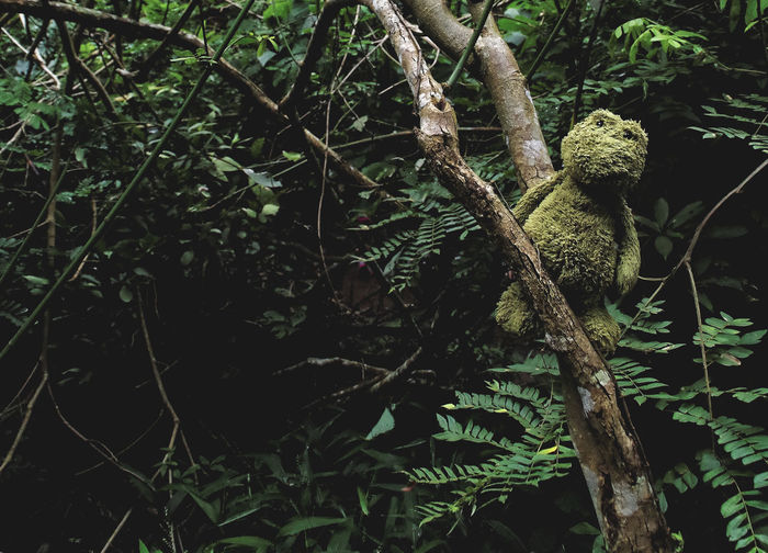 found this guy in the jungle. Beauty In Nature Branch Close-up Cuddly Cuddly Toy Cute Forest Frog Green Color Growth Jungle Jungle Trekking Kermit Leaf Nature No People Outdoors Plant Teddy Teddy Bear Thailand Toy Tranquility Tree Trekking
