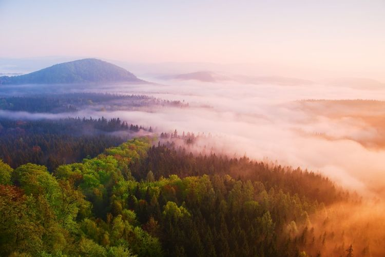 Misty daybreak in a beautiful hills. peaks of hills are sticking out from foggy background