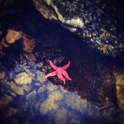 Dat sea life doh. Starfish  Oceanlife Kindalazy Nonchalant