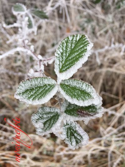 Frostige Ansicht 💕💗 Monique52 Nature Outdoors Beauty In Nature Frostig Dezember 2016 Südschwarzwald Iphone6 The Purist (no Edit, No Filter)