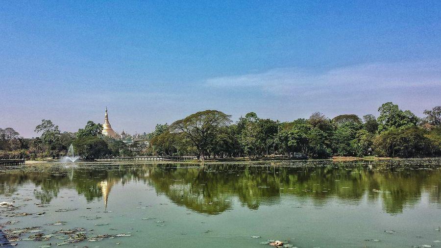 Urban Lake Dry Season Outdoors Southeast Asia ASIA Central Myanmar Central Burma Yangon Buddhism Burma Temple Paya Pagoda Phaya Afternoon Blue Sky Shwedagon Pagoda Shwedagon Reflection Water မြန်မာ ရန်ကုန် Battle Of The Cities