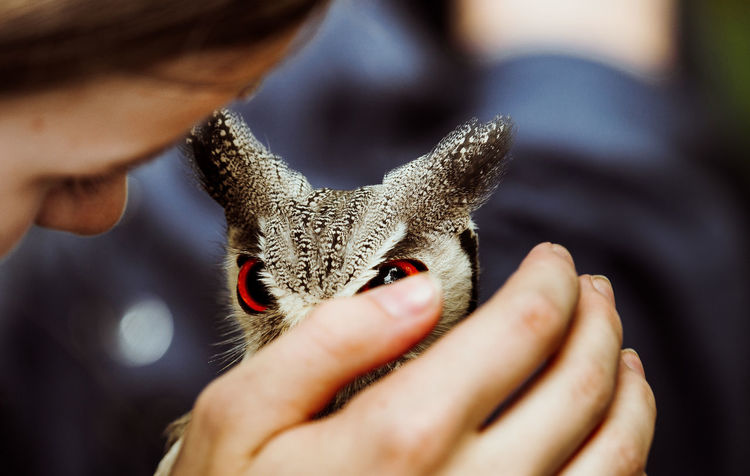 true love Animals In The Wild Close-up Cute Day Eyes Holding Human Body Part Human Hand Indoors  Love Men One Animal One Person Owl People Pets Real People Selective Focus Unrecognizable Person Live For The Story Place Of Heart The Great Outdoors - 2017 EyeEm Awards Pet Portraits
