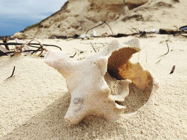 Broken shell waged out on a beach in Cayo Coco, Cuba, after a hurricane Sand & Sea Sand Dune Broken Shell Detail Beach Sand Hurricane - Storm Hurricane Irma 2017 Cayo Coco Cuba Seashell Day No People Close-up