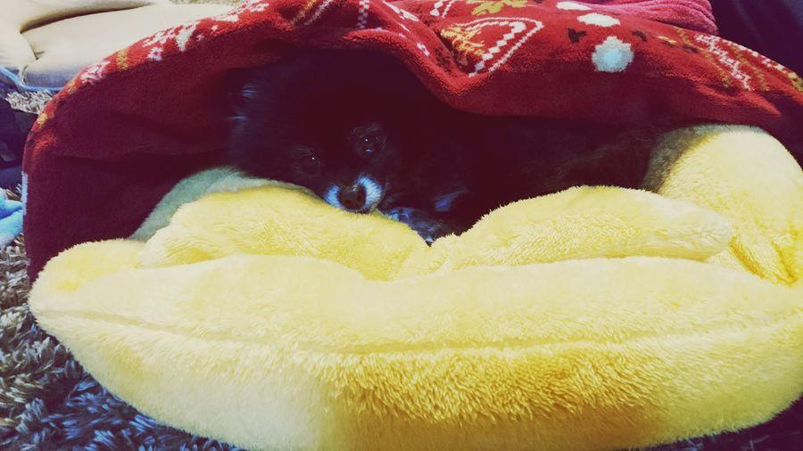 🐻 Dog Love Kotatsu Very Nice So Cute<3