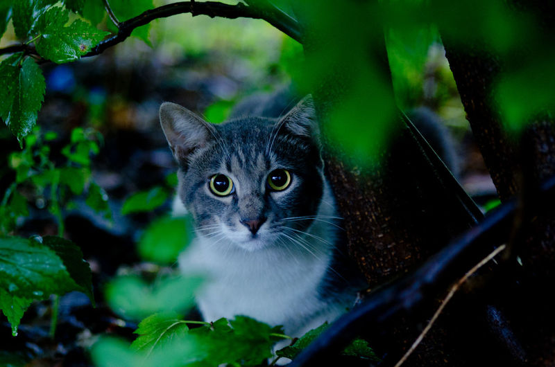 a cat in a bush Animal Eye Animal Themes Cat Domestic Cat Japan Looking At Camera Mammal One Animal