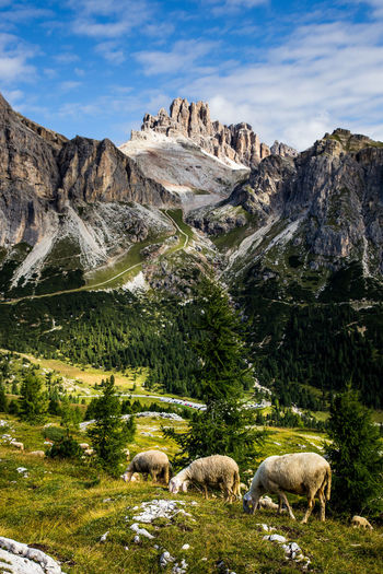 Eine Wanderung durch die Dolomiten. Alpen Alpenpanorama Alpes Berge Dolomiten Dolomites Dolomites, Italy EyeEm Nature Lover Idyllic Mountains And Sky Naturerlebnis Naturschutz Naturschutzgebiet Naturwunder Panoramic Photography Sonnenaufgang Sunrise Südtriol Tirol  Wandern Go Higher