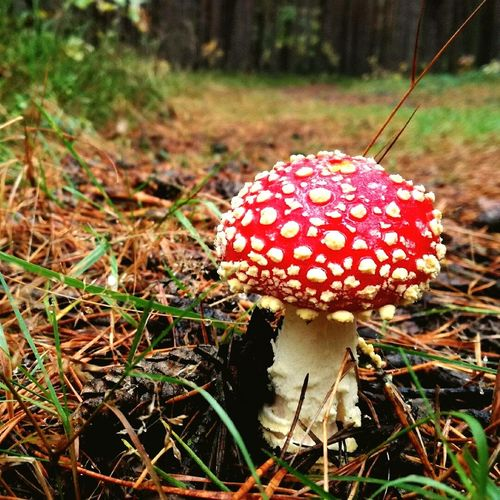 Toadstool Mushroom Nature Red Beauty In Nature Toadstool Forest First Eyeem Photo EyeEmNewHere