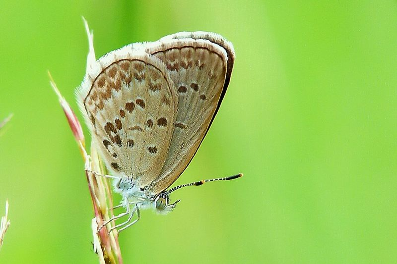 Insect Animals In The Wild No People Animal Wildlife Nature Leaf Butterfly - Insect Tranquility Animal Themes Full Length Close-up Outdoors Perching Day