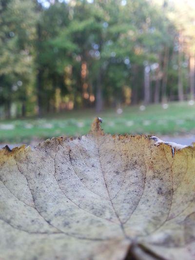 Leaf First Eyeem Photo