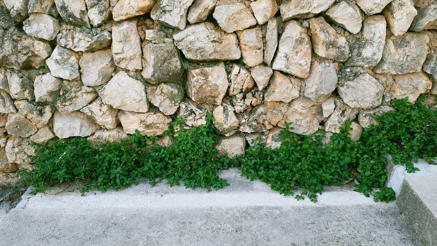 Plants growing by stone wall