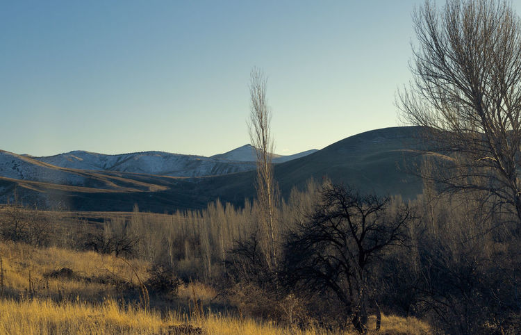 Village Life Beauty In Nature Branches Clear Sky Day Forest Grassy Landscape Mountain Nature Nature Nature Reserve Niğde Outdoors Scenics Sky Tranquil Scene Trees Turkey Village Village Life