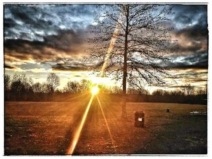 Sunrise on the field