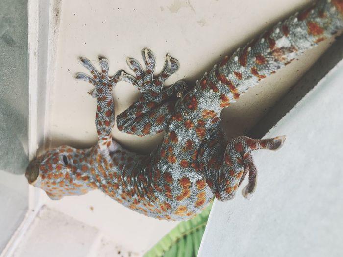 High angle view of a lizard on wall