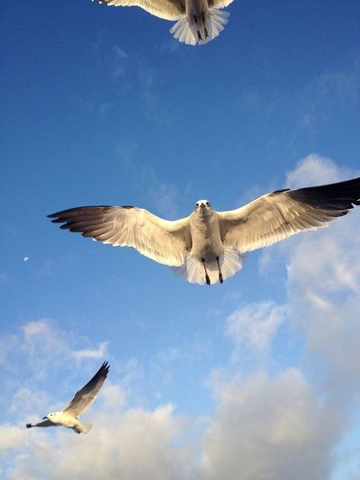 Low angle view of seagulls flying against sky