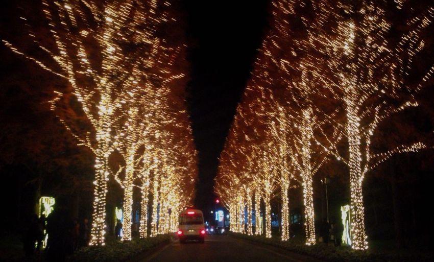 Illuminations Illumination Tree Silhouette Roadside Tree Metasequoia LED Winter Lighting Kyoto Japan