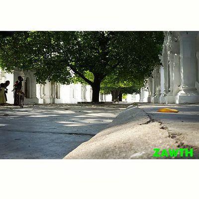 စိမ္းစိုစို ထိုကုသိုလ္ ေအးျမျမ ေတာ္ဝင္ဗ်… The compound of the RoyalMerit or the world biggest book. Igersmandalay Igersmyanmar Mandalay Myanmar Myanmarphotos Vscomyanmar Ig_worldphoto Igglobal Kuthodaw Royalmerit Rcnocrop