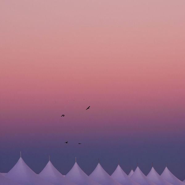Beach Photography Birds Of EyeEm  Tent Camping
