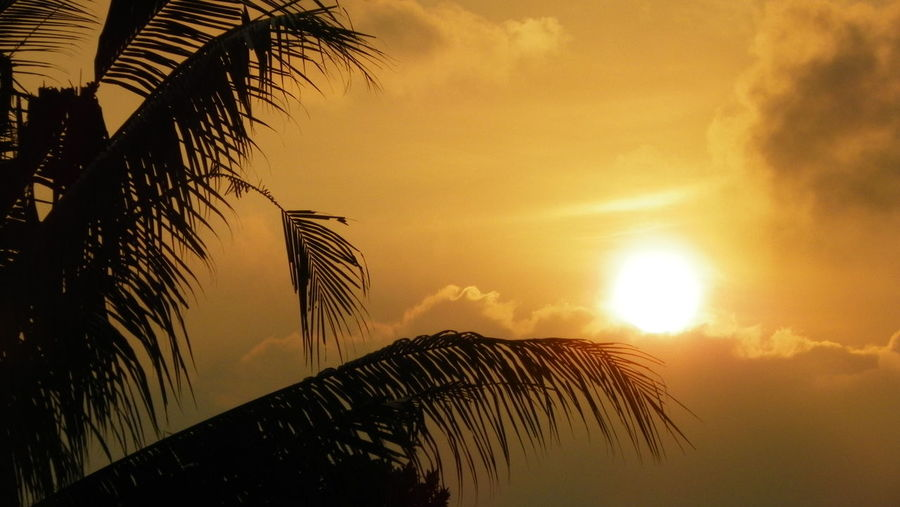 Sunset and palm leaves, Denpasar, Indonesia Beauty In Nature Day EyEmNewHere Nature No People Orange Color Outdoors Palm Palm Frond Palm Tree Scenics Silhouette Sky Sun Sunlight Sunrise Sunset