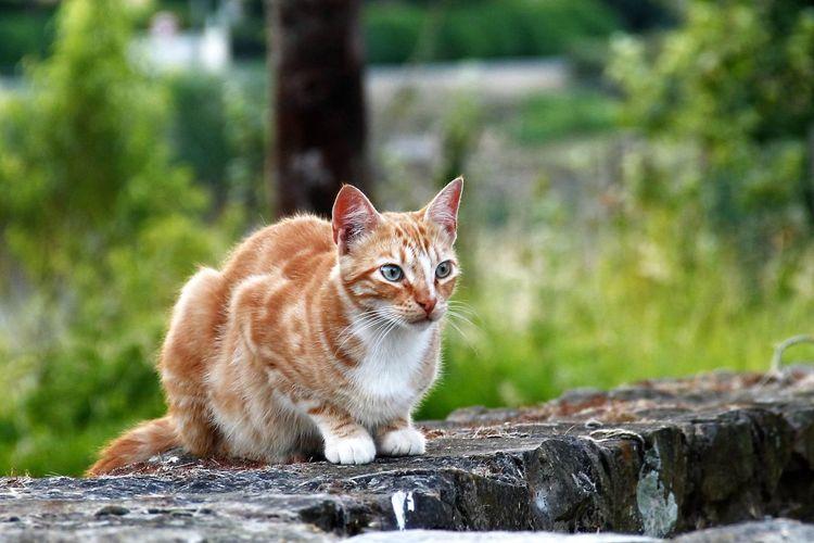 EyeEm Hello World Hi!! No People El Tiempo Detenido EyeEm Gallery Cats And Dogs Cats Animal Photography