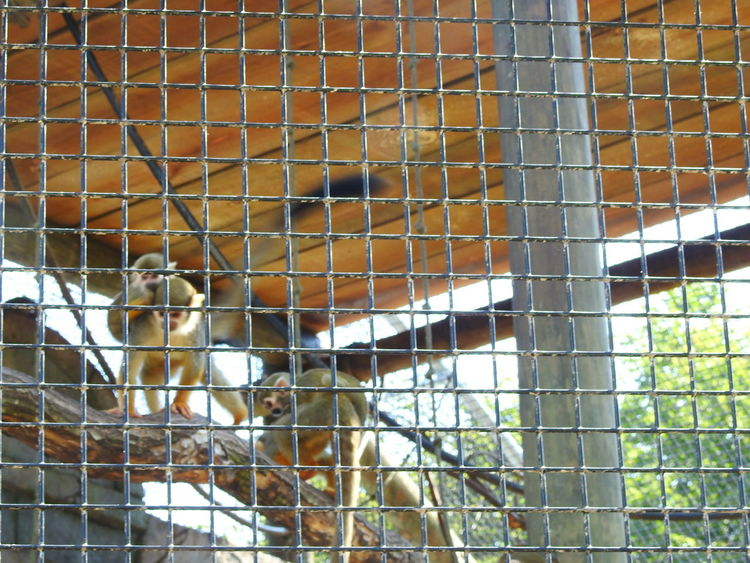 Animal Themes Animals In The Wild Cage Close-up Day Mammal Nature Outdoors