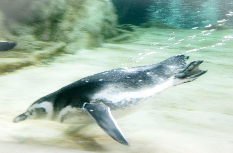Pinguine One Animal Acquario Di Genova Genova Italy 🇮🇹 HuaweiP9