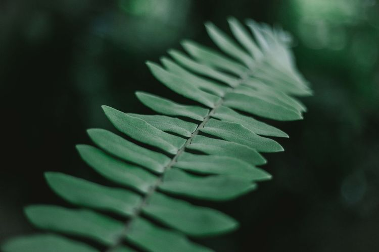 Beauty In Nature Fern Green Color Growth Leaf Leaves Nature Photography Plant Part