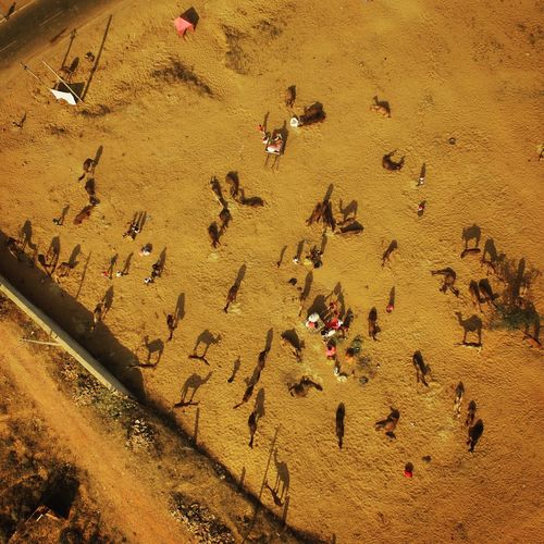 My Year My View Showing a aerial shot of the Pushkar Camel Fair that tooke place in mid -November and came out to be wonderful. Camels Pushkar Pushkarcamelfair Drone  Aerial Adapted To The City Flying High Modern Hospitality The Photojournalist - 2018 EyeEm Awards