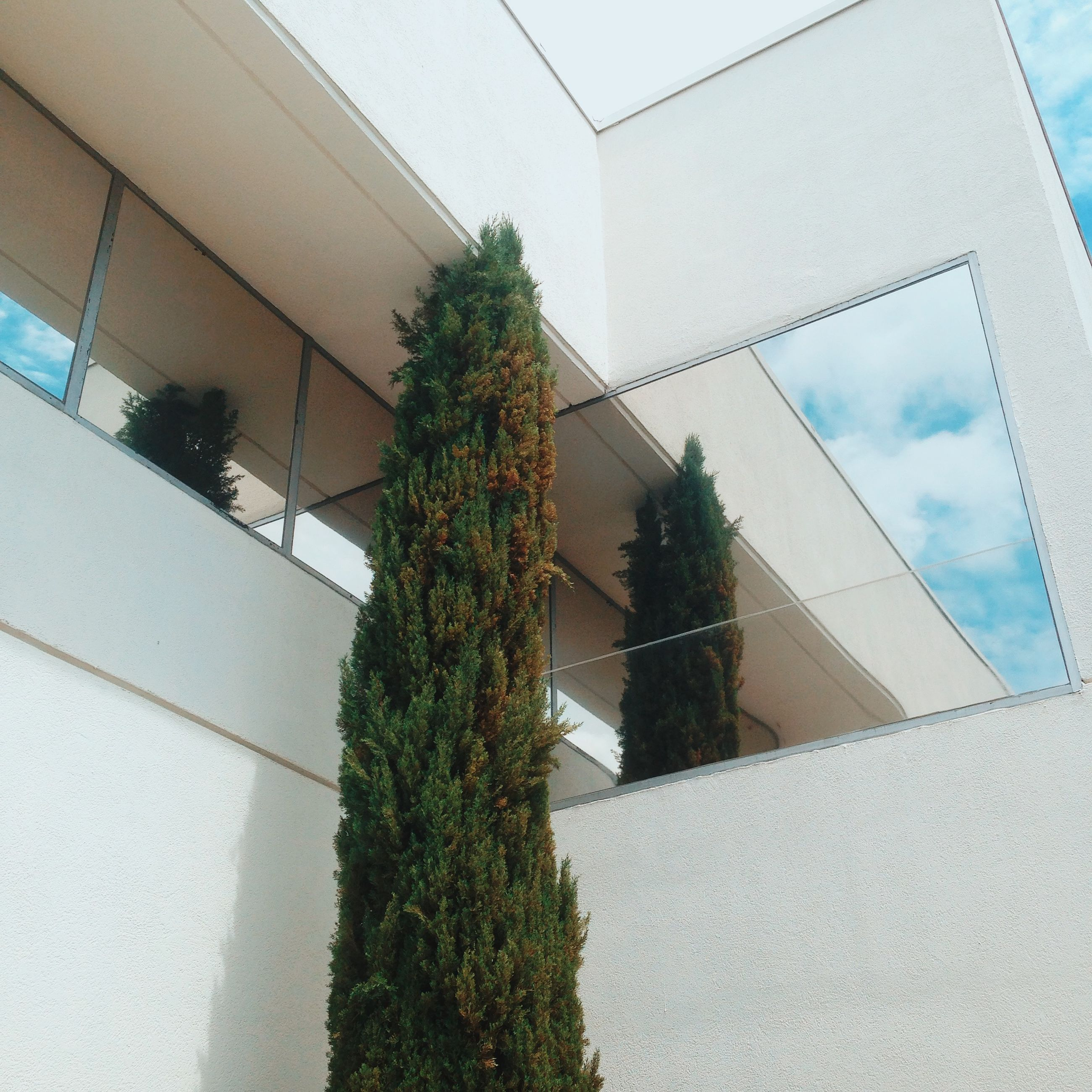 architecture, built structure, building exterior, low angle view, sky, plant, growth, building, window, tree, glass - material, house, day, reflection, wall - building feature, no people, palm tree, outdoors, residential building, residential structure