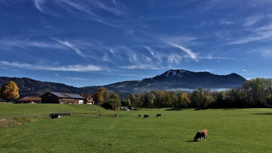 Allgäu Alps Countryside Idyllic Cheese I'm always impressed by this landscape.