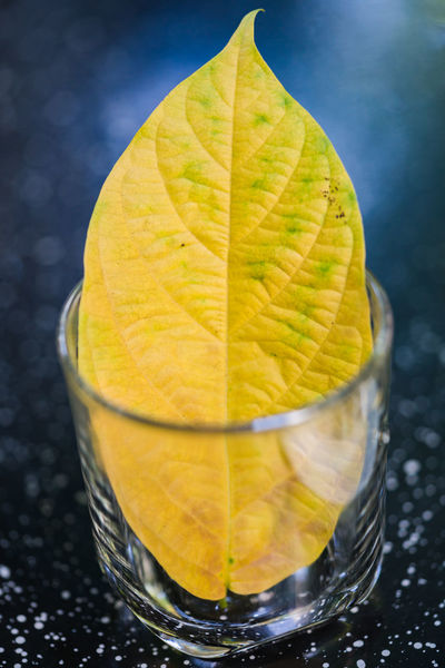 Paint my pic Yellow 😎😎 Citrus Fruit Close-up Day Drink Drinking Glass Food And Drink Freshness Fruit Healthy Eating Leaf Lime Minimalism No People Orange - Fruit Outdoors Refreshment SLICE Yellow