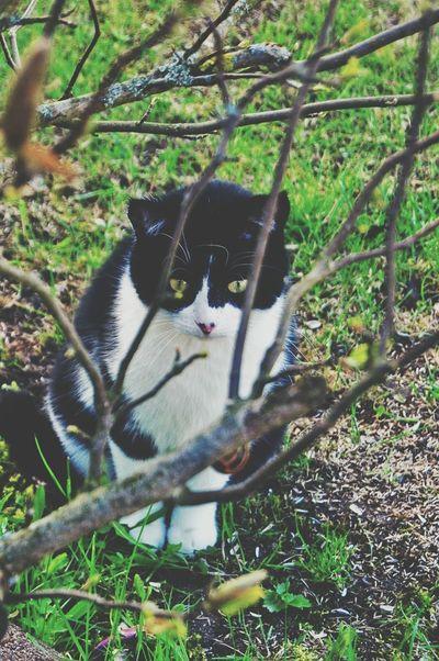 Kitty Blackandwhite Spring Nature