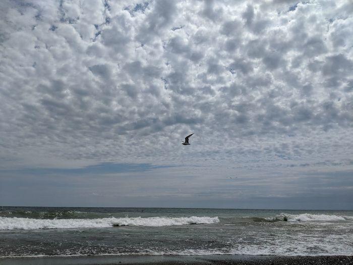 Bird Water Sea