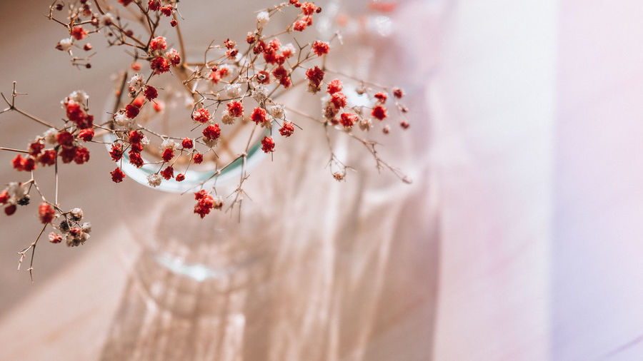 Gypsophila or baby's breath flowers beautiful pink flower blooming with soft light. selective focus.