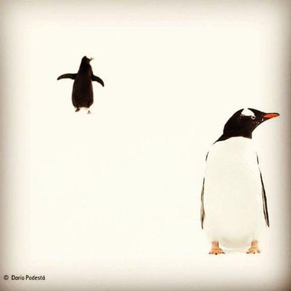 Nature Snow Snowy Snowman Freezing Freez  Birds Animals Penguin Penguins Natgeo بطريق ثلج